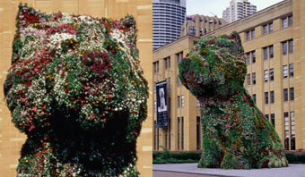 Jeff Koons' Puppy, MCA, 1995