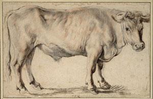 Rubens - Ox